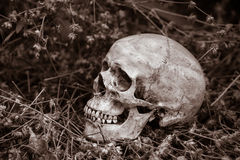 Skull in park Royalty Free Stock Photos