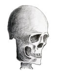 Skull - pencil on paper Royalty Free Stock Photo