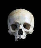 Skull of the person. stock photography