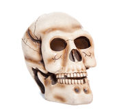 Skull of the person Stock Photos