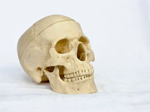 Skull of the person 4. The image of a skull of the person on a homogeneous background Royalty Free Stock Photos
