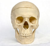 Skull of the person 5. The image of a skull of the person on a homogeneous background Royalty Free Stock Photos