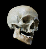 Skull of the person. Stock Image