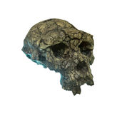Skull of the person on a white background. Stock Photo
