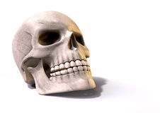 Skull Perspective Stock Photography