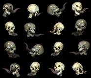Skull position Stock Images