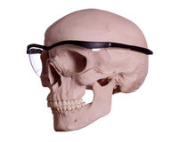 Skull with protection glasses Royalty Free Stock Image