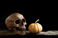 Skull with pumpkin Royalty Free Stock Image