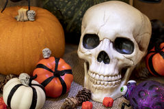 Skull and Pumpkins Royalty Free Stock Photo