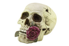 Skull with a purple rose in your teeth. Statuette Stock Photo