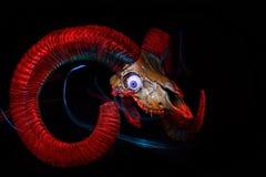 Skull of ram with evil eye Royalty Free Stock Image