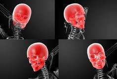 Skull X-rays. 3d rendering skull X-rays Royalty Free Stock Image