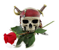Skull and red rose Stock Images