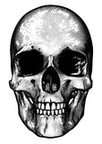 Skull Retro Style Drawing Stock Images