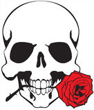 Skull & rose. Skull with a red rose in a teeth on a white background Stock Photography