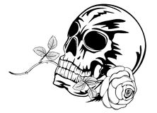 Skull with rose Stock Photo