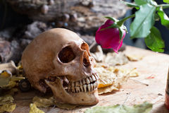 Skull Rose Love Royalty Free Stock Images