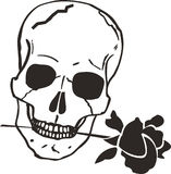 SKULL WITH ROSE Royalty Free Stock Photos