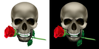 Skull with a rose in the teeth Stock Photos