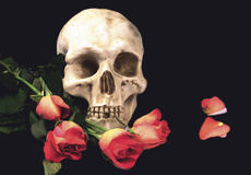 Skull and roses on black background. Human skull and flowers on black royalty free stock photo