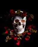 Skull in roses. Studio Shot royalty free stock photo