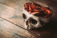 Skull and roses Stock Image