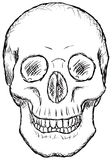 Skull - rough vector drawing Royalty Free Stock Photo