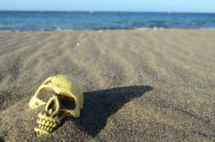 Skull on Sand Royalty Free Stock Photography