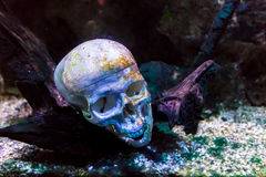 The skull on the seabed Royalty Free Stock Photo
