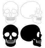 Skull set Stock Photos