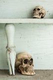 Skull on shelf Royalty Free Stock Images
