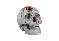 Skull shot and blood Stock Photos