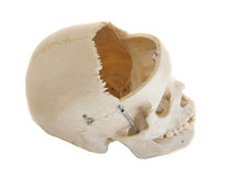Skull Side Profile with Open Frontal Royalty Free Stock Photo