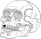 Skull sige Royalty Free Stock Images