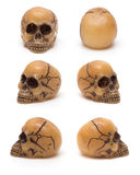Skull, from six perspectives Royalty Free Stock Photos