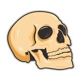 Skull skecth Royalty Free Stock Photography