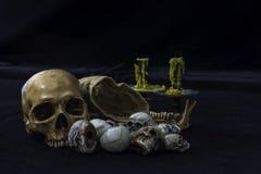 The skull or skeleton human photography Stock Photos