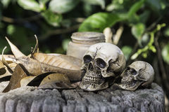 The skull or skeleton human photography. The skull or skeleton of human photography Stock Photo