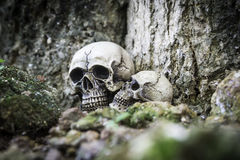 The skull or skeleton human photography Stock Photo