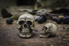 Skull or skeleton of human photography Royalty Free Stock Photos