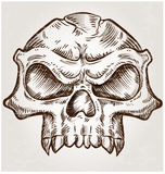 Skull sketch design Royalty Free Stock Photography