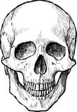 Skull sketch Stock Image