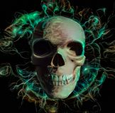 Skull royalty free illustration