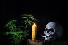 Free Skull Smoking Cannabis Royalty Free Stock Images - 52614039