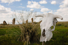 Skull on a stick Stock Image