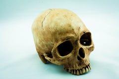 Skull. Still Life with a Skull concept royalty free stock photos