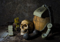 Skull still life Stock Photo