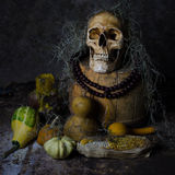 Skull still life Stock Photography