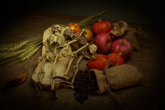 Skull in Still Life Style. Stock Photos