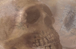 Skull with striped moth on old handwriting Stock Photos